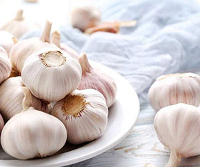 Garlic series